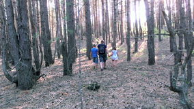 древесины семьи гуляя видеоматериал