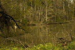 древесины Стоковые Фото
