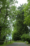 древесины Стоковая Фотография