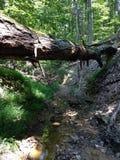 древесины Стоковое Фото