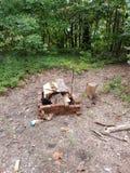 древесины Стоковые Фотографии RF