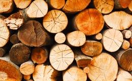 древообразно стоковое фото rf