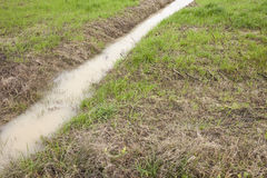 Рев в поле Стоковое Фото