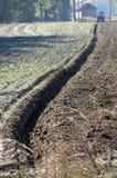 Рев на поле Стоковые Фотографии RF