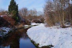 Рев окруженный снегом Стоковые Изображения RF