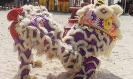 Регата шлюпки дракона, пляж Тобаго пункта голубя Стоковое Фото