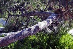 Редкий взгляд старого дерева в парке Стоковые Фото