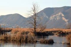 Редкое явление замороженных трясин озера Iseo - Брешия - стоковое фото
