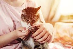 режет когти кота стоковая фотография