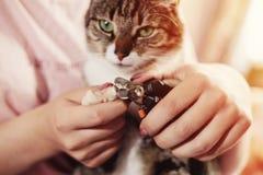 режет когти кота стоковая фотография rf