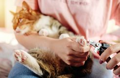 режет когти кота стоковое изображение
