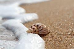 Режим макроса Прибрежная волна касается красивой раковине лежа на чистом песочном побережье стоковое фото