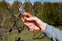 Резать о фруктовых дерев дерев стоковые фото