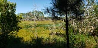 Резервирование леса пруда дерева стоковые фотографии rf