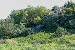 Резервуары и shelterbelts поля Стоковое Изображение RF
