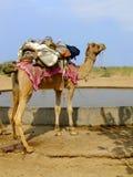 Резервуар воды верблюда готовя в малой деревне во время пришел Стоковое фото RF