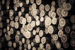 Резерв сырцовых хоботов лесного дерева после вносить древесину в журнал стоковые изображения rf