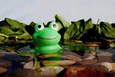 Резиновая лягушка стоковые изображения