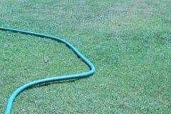 Резиновая трубка для моча заводов в саде Стоковая Фотография