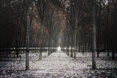 Резиновые плантации Стоковые Фото
