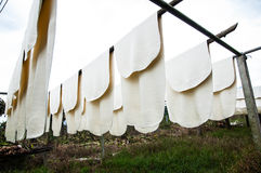 Резиновый лист Стоковая Фотография