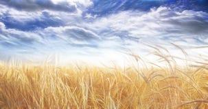 Резюмированные поле и небо стоковая фотография rf