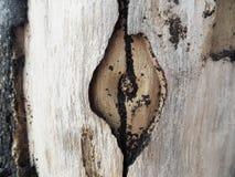 Резюмирует деревянный конец стоковые изображения rf