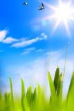 Резюмирует предпосылку весны beautifu Стоковые Фото