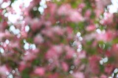 резюмируйте весну предпосылки Стоковые Изображения RF