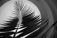 резюмируйте листья Стоковое Изображение RF