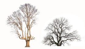 Резюмируйте поверхностную текстуру ветвь мертвого дерева с wh Стоковое Изображение