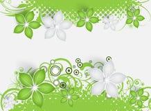 резюмируйте предпосылку флористическую Стоковое Изображение
