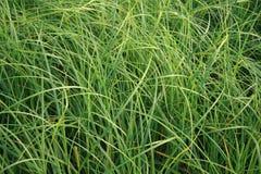 резюмируйте траву Стоковое фото RF