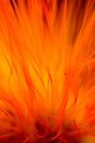 резюмируйте цветок пламени стоковые изображения rf