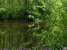 река Амазонкы Стоковые Фото