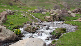Река весны Стоковые Изображения