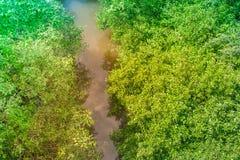 Река взгляд сверху малое около зеленых деревьев на открытом саде Стоковые Изображения RF