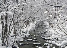 Река в лесе зимы Стоковые Изображения