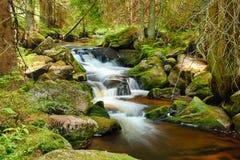 Река в лесе Стоковые Фотографии RF