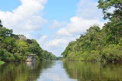 Река в джунглях Амазонки, Перу стоковая фотография rf