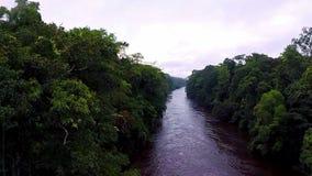 Река в джунглях Камера медленно поднимает над тропическим лесом акции видеоматериалы
