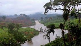 Река в джунглях Экваториальная Гвинея malabo вышесказанного акции видеоматериалы