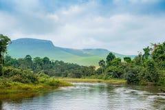 Река в джунглях Стоковая Фотография RF