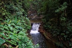 Река в запасе Curi Cancha, Monteverde стоковые изображения rf