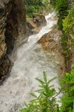 Река в зеленом лесе стоковые изображения