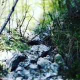 река в Италии Стоковая Фотография