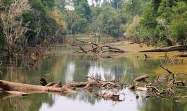 Река в Камбодже Стоковые Изображения RF