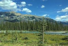 Река в канадских скалистых горах - национальный парк Kootenay стоковое фото rf