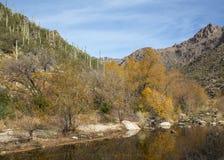 Река в каньоне Sabino стоковая фотография