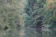 Река в лесе стоковое фото rf